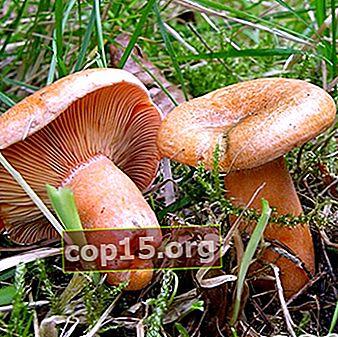Cosa si può fare con funghi grandi: ricette fatte in casa