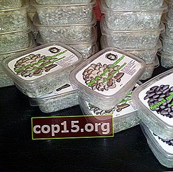 Kornmycelium och substrat för odling av svamp