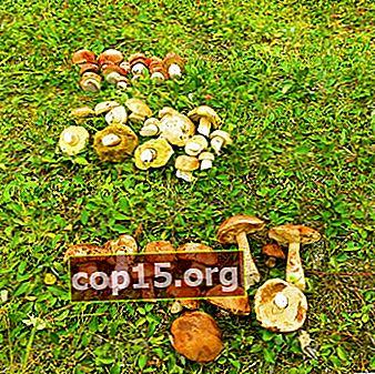 Quali funghi crescono ad agosto