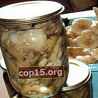 Russula marinata per l'inverno in barattolo: ricette di cucina
