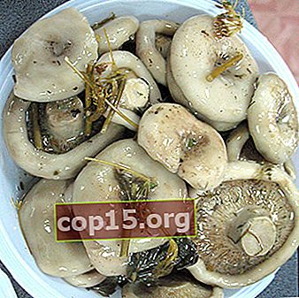Rețete pentru prepararea ciupercilor de lapte crocante pentru iarnă