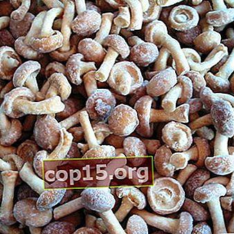 Cum să congelați corect ciupercile pentru iarnă