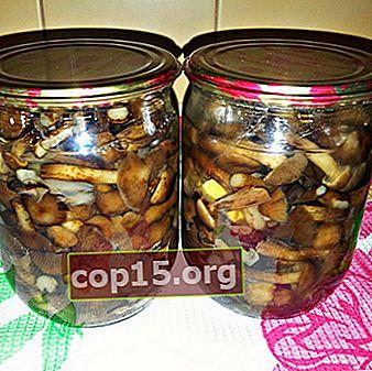 Ciuperci de miere pentru iarnă: rețete pentru preparate de ciuperci