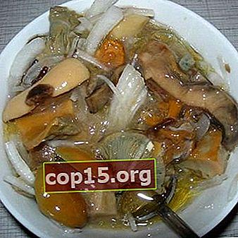 Raccolta della russula per l'inverno: ricette per cucinare i funghi