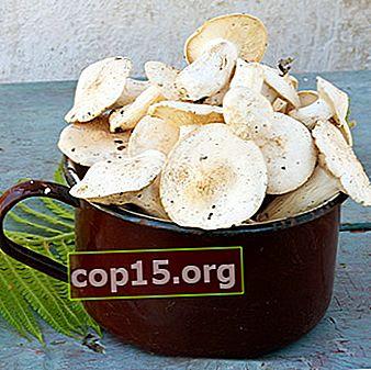 Ricette di decapaggio a freddo per i funghi