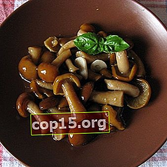 Come marinare i funghi di canapa: ricette per l'inverno