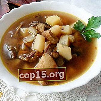 Come cucinare il micelio dal burro: ricette per deliziose zuppe