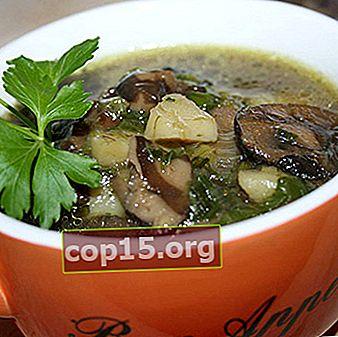 Come cucinare una deliziosa zuppa di funghi di latte