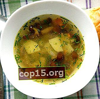 Ricette di zuppa di funghi freschi al miele