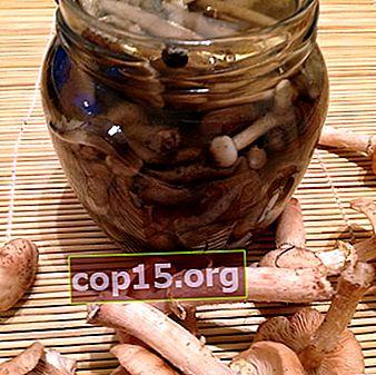 Decapaggio estivo, autunnale e agarico di miele di canapa per l'inverno