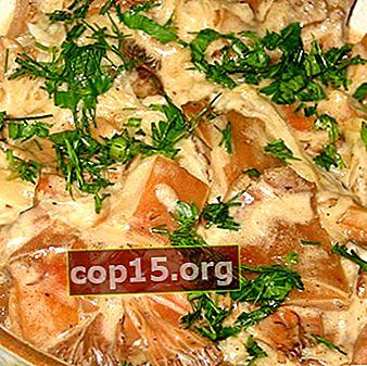 Funghi stufati: ricette per piatti deliziosi