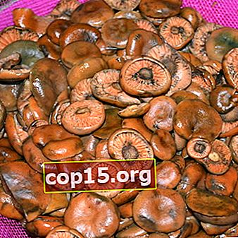 Come salare e marinare i funghi in modo che i funghi non si scuriscano