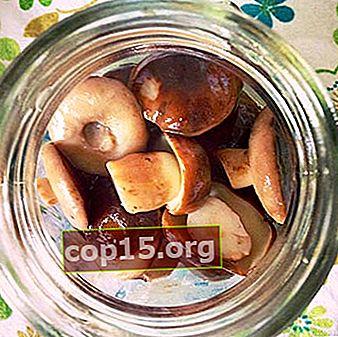 Funghi porcini marinati per l'inverno: ricette per cucinare i funghi