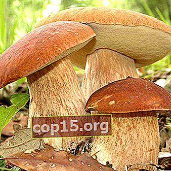 Ricette e metodi di cottura dei funghi porcini