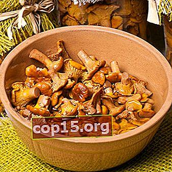 Finferli marinati per l'inverno: ricette fatte in casa