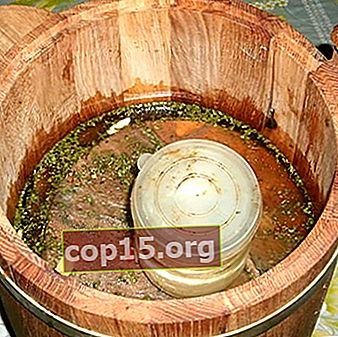 Ryzhiks sotto oppressione: ricette per il decapaggio dei funghi fatto in casa