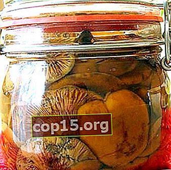 Spazi vuoti di camelina: le migliori ricette di funghi