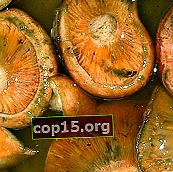 Decapare pentru decapare și decapare ciuperci: rețete