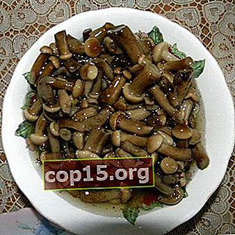 Cum să murăm ciupercile crocante pentru iarnă