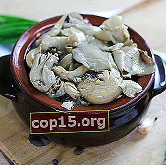 Funghi ostrica in salamoia: ricette fatte in casa