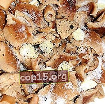 Salazón rápida de tapas de leche de azafrán para el invierno: recetas populares.
