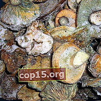 Congelarea ciupercilor pentru iarnă sub formă crudă, fiartă și sărată