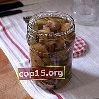 Unt pentru iarnă în borcane: metode de sărare a ciupercilor