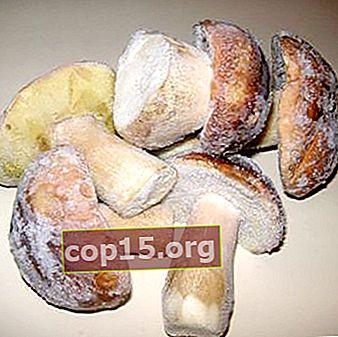 Congela le ricette di funghi porcini per l'inverno