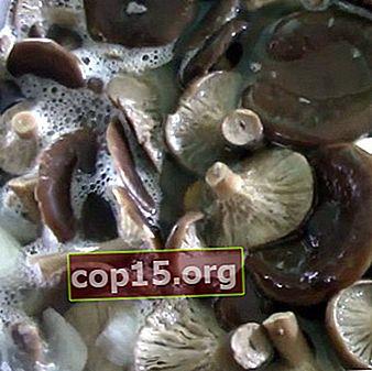 Come marinare i funghi autunnali: ricette per l'inverno