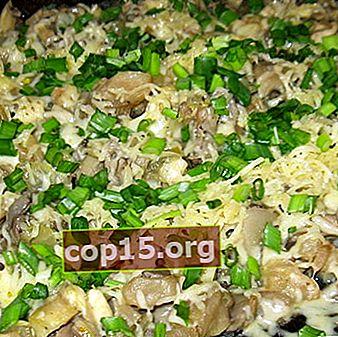 Funghi ostrica con formaggio: ricette per zuppe e insalate