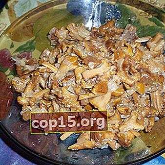 Finferli con carne: ricette per sostanziosi piatti a base di funghi