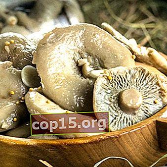 Ricette per preparare piatti con funghi di latte