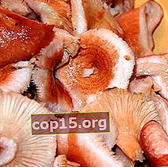 Metodi per salare i funghi per l'inverno