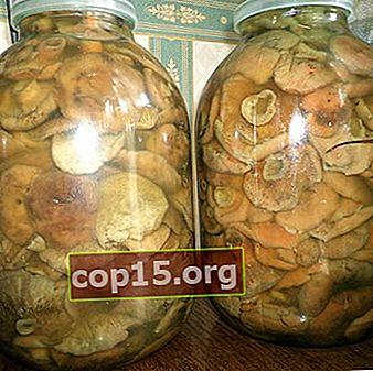 Varför svampar är mögliga och hur man hanterar detta problem