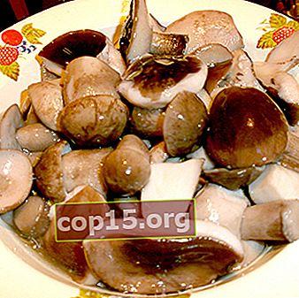 Funghi porcini sott'aceto: ricette facili passo-passo