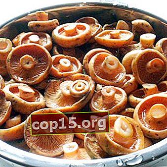 Funghi bolliti per l'inverno: ricette passo passo