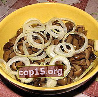 Come salare i funghi champignon: ricette fatte in casa
