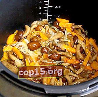 Hoe honingpaddestoelen in een slowcooker te koken: recepten met foto's